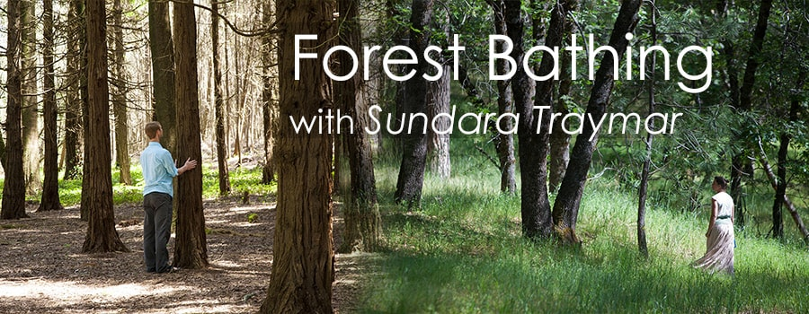 Forest Bathing -