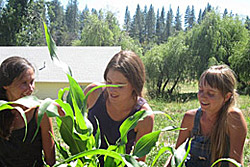 farmgirl apprentices
