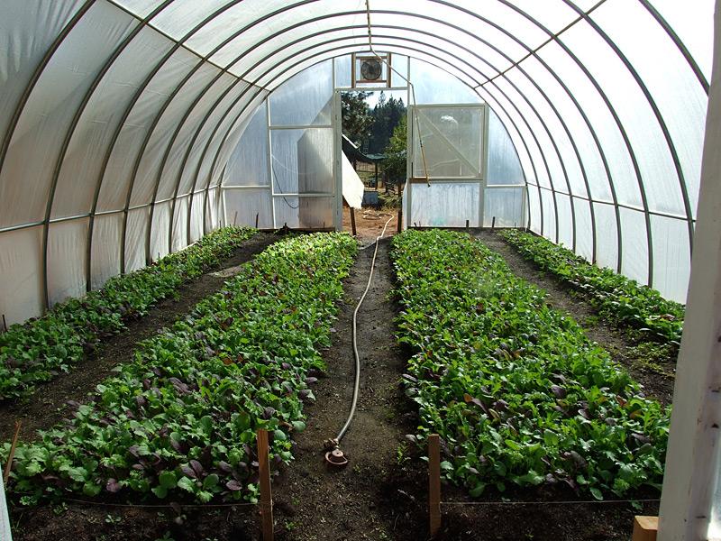 Ananda organic farm apprenticeship Organic house